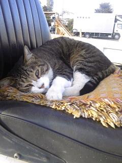 ショベル猫
